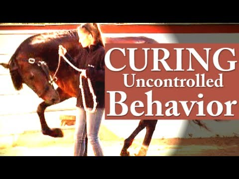 hempfling-–-instant-behavior-correction-–-the-peaceful-horse-warrior's-victory