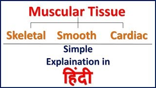 Muscle Tissue - Types Of Muscle Tissue Simple Explaination in Hindi | Bhushan Science