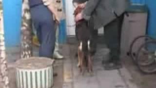 Адвокат, собака-инвалид
