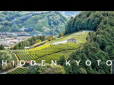 Kyoto Hidden Spots: Japanese Tea Town Wazuka | Kyoto Travel
