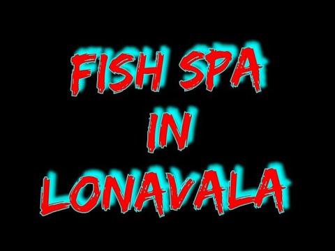 Garra Fish , Dr Fish Spa Pedicure Setup Of  International Standards By Deepa Aquarium In Lonavala