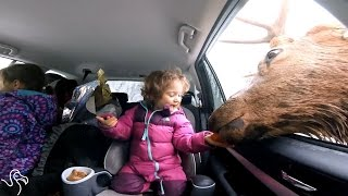 Kids Falling In Love With Animals