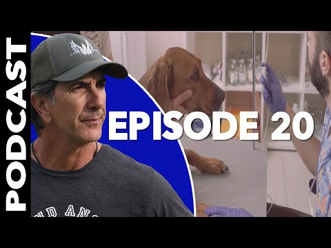 When to Put a Dog Down for Aggression  Reactive Dog Training Video Podcast Episode 20