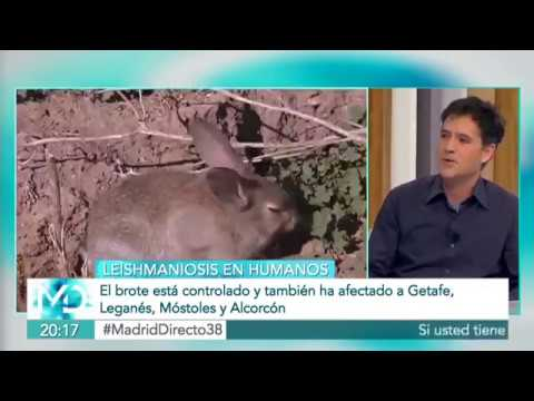 MadridDirecto  Brote Leishmaniosis humana, Madrid