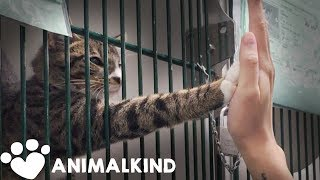 Bet you'd adopt a cat if it knew how to do this 🤚😺 | Animalkind