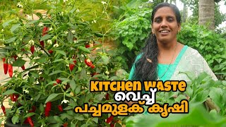 Kitchen Waste ഉണ്ടോ ? എങ്കിൽ പച്ചമുളക് കൃഷി പൊളിക്കും |  Mulag Krishi | Chilli Farming in Malayalam