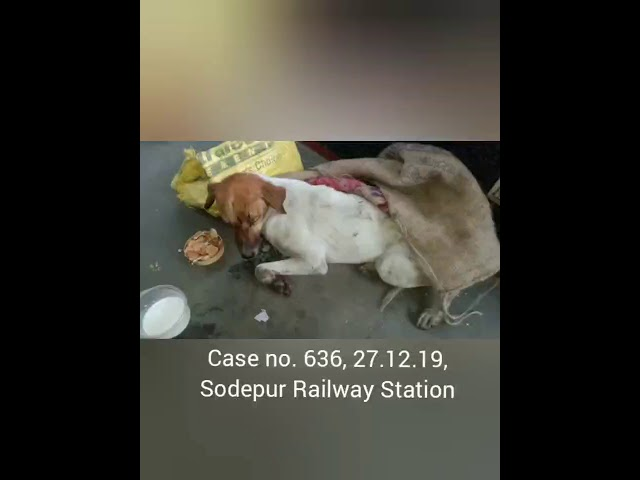 Case no. 636, 27.12.19, dog knocked down by train.