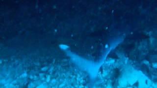 鮫(眠り鱶)沖縄 万座毛