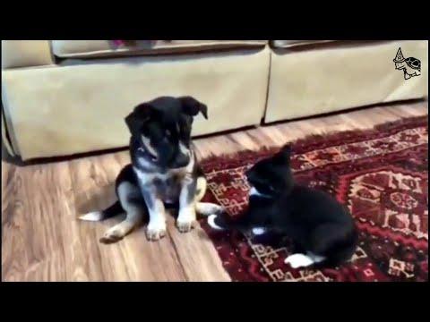 Best Adorable Attacks [Animal Videos] #1