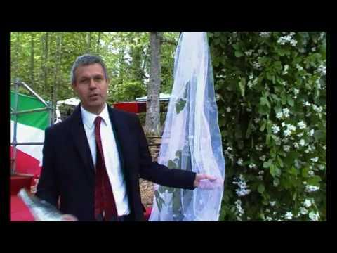 ARBORETUM di Antimo Palumbo - Lo sposalizio dell'albero a Vetralla