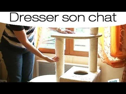 Dressage emp cher un chat de faire ses griffes partout youtube - Comment empecher un chat de faire pipi partout ...