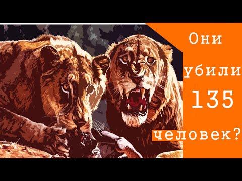 Львы-людоеды из Цаво. Серийные убийцы или жертвы человеческой безответственности?