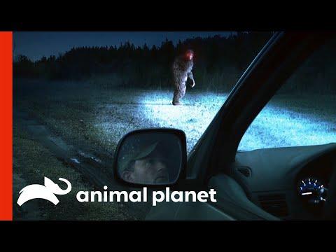 Witness Recalls Frightening Encounter With Bigfoot | Finding Bigfoot