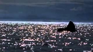 Michael Jackson - Free Willy (will you be there) video from