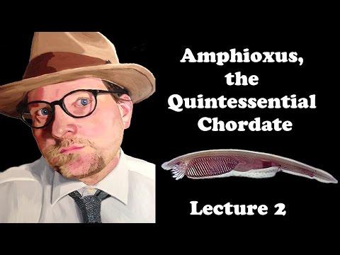 Lecture 2 Amphioxus, the Quintessential Chordate