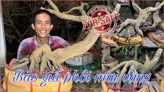 Báo giá Mai Phôi Cần Thơ, dáng độc 24/08 ☎️ 0939 829852 Huỳnh Nhiệm