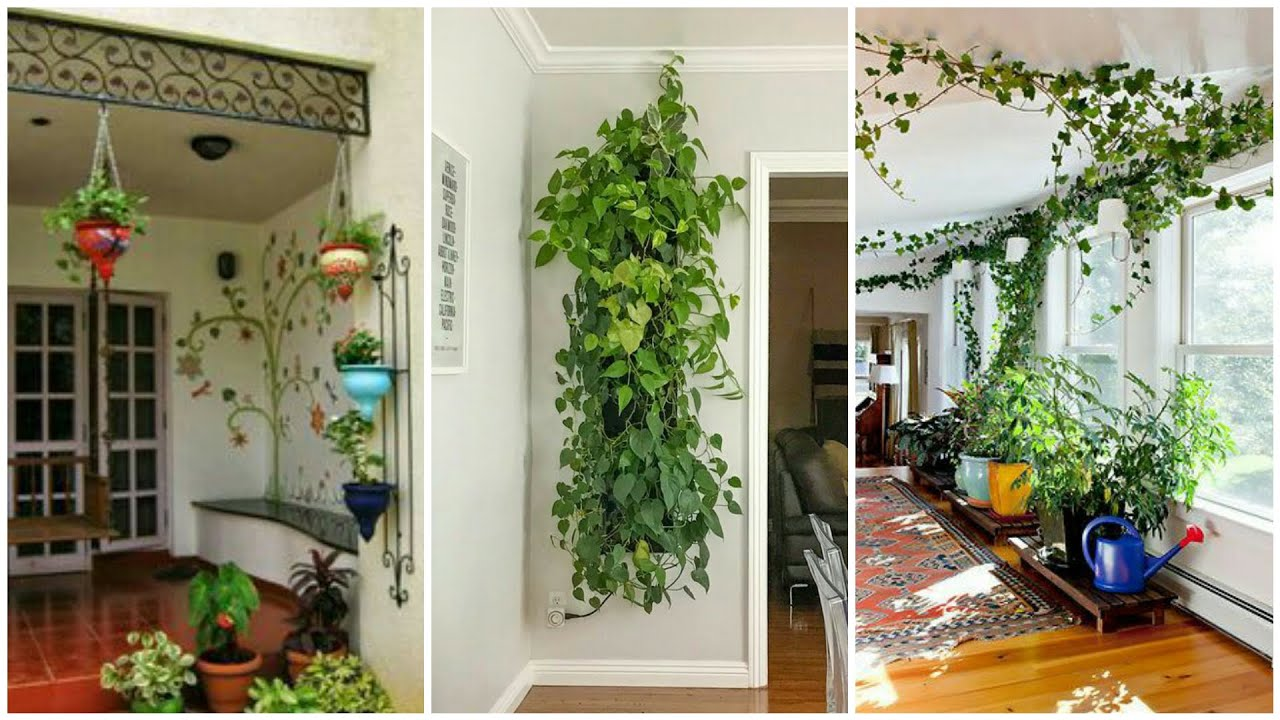 Most Beautiful Indoor plant Arrangement ideas/Amazing Hanging plants for  home decor