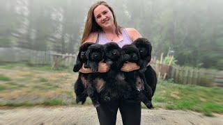 The Top 10 Pampered Dog Breeds