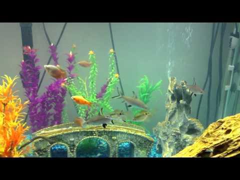 My Semi Aggressive Tropical Freshwater Fish Tank