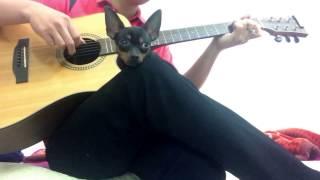 Hoạ Tâm - Guitar Solo