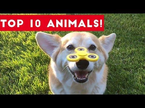 Top Ten Funny/Cute Pet Videos of August Part 1