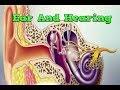 Ear And Hearing, Causes Of Sensorineural Hearing Loss, Losing Hearing, Types Of Hearing