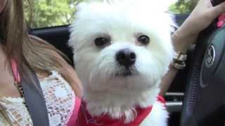 VLOG! Follow Me Around the Mall, Puppy Store & More!(, 2013-08-15T02:56:45.000Z)