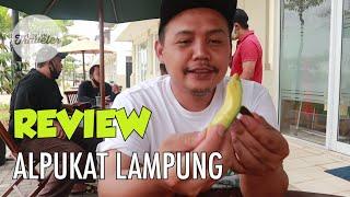 REVIEW ALPUKAT LAMPUNG
