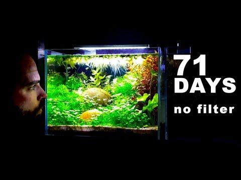 SUPER RELAXING 4 GALLON AQUARIUM...(How To Aquascape: No Filter No Ferts No co2 No Heater Fish Tank)