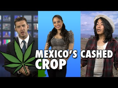 Mexico's Cashed Crop