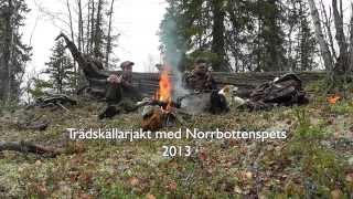 Trädskällarjakt med Norrbottenspets 2013