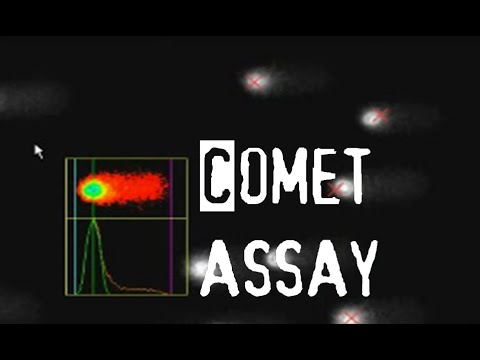 Comet Assay | Apoptosis Assay