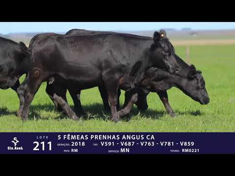 LOTE 211 - TAT V591 V687 V 763 V 781 V 859
