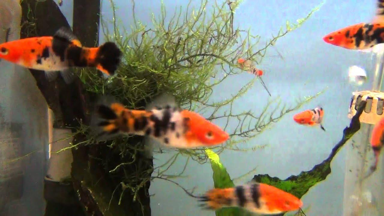 Tropical Fish Shop 2 Apk