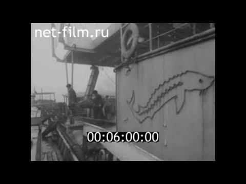 1983г. село Марфино. колхоз Победа. Володарский район Астраханская обл