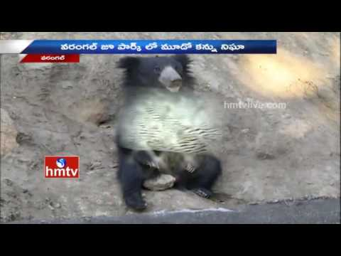 Warangal Zoo Officials Arranged CC Cameras To Safety For Visitors | HMTVV