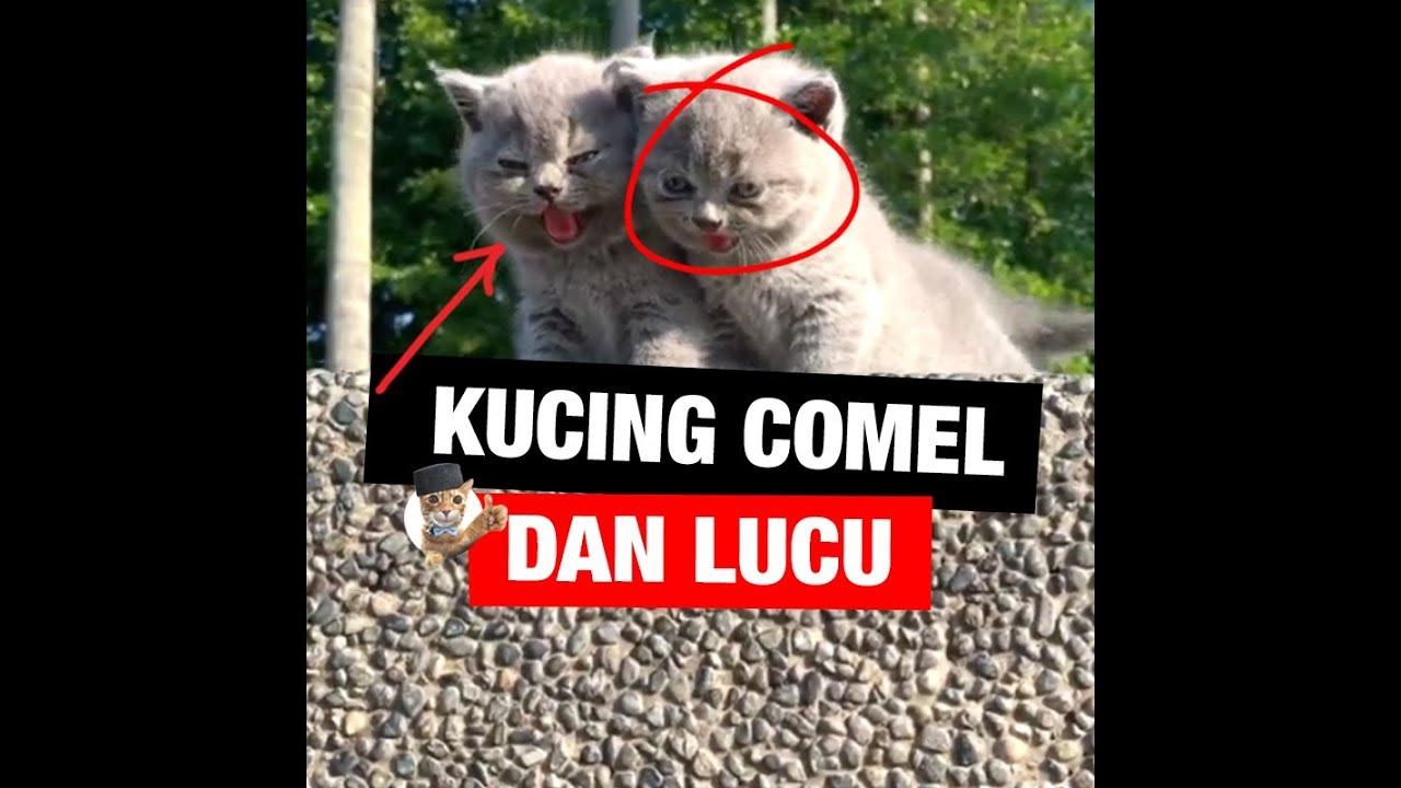 Kompilasi Kucing COMEL & LUCU