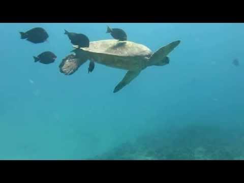 Diving Hawaii 1