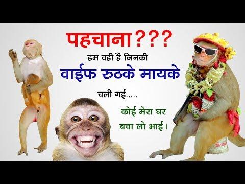 बन्दर का तमाशा Funny Monkey Videos & Madari Street Game | Bander Bandari & Madari, Bandar Ka Khel