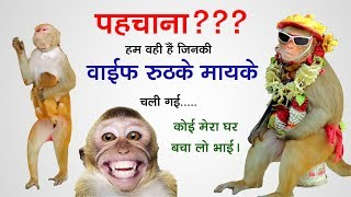 बन्दर का तमाशा Funny Monkey Videos & Madari Street Game | Bander Bandari & Madari, Funny Monkey Kids