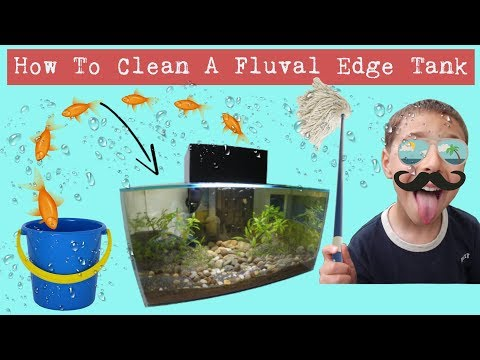How to clean a Fluval Edge 22L tank