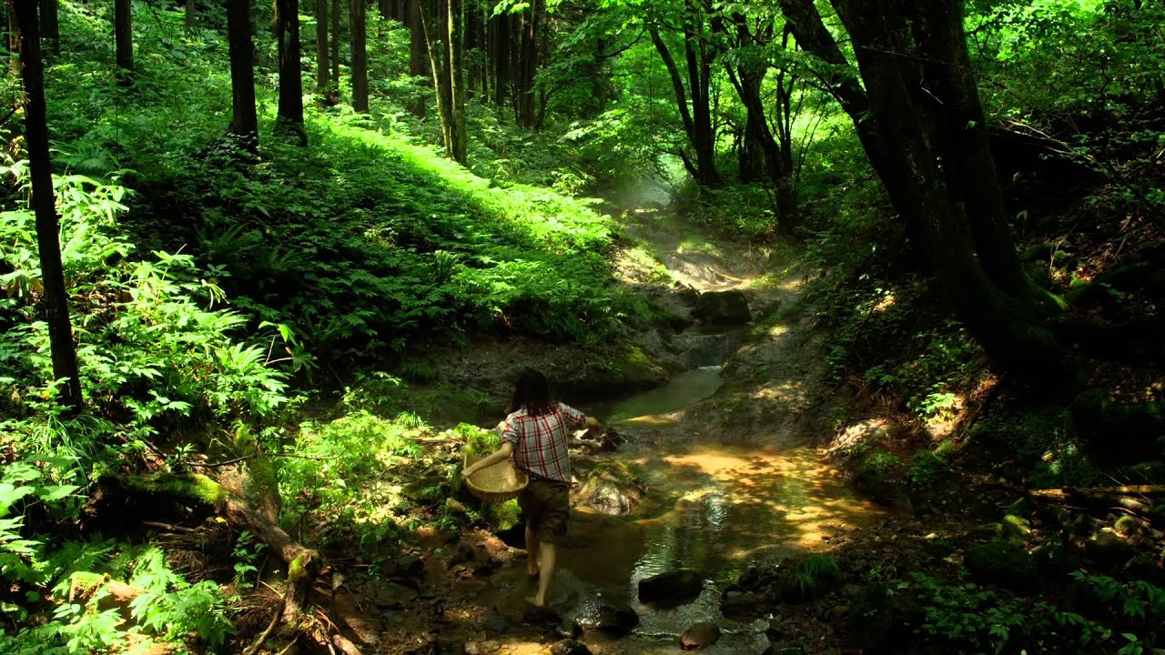 Amazon River Hd Wallpaper Th Official Little Forest Summer Amp Autumn Youtube