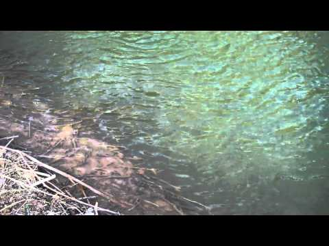 Pecos river new mexico fly fishing 2 19 11 youtube for Pecos new mexico fishing