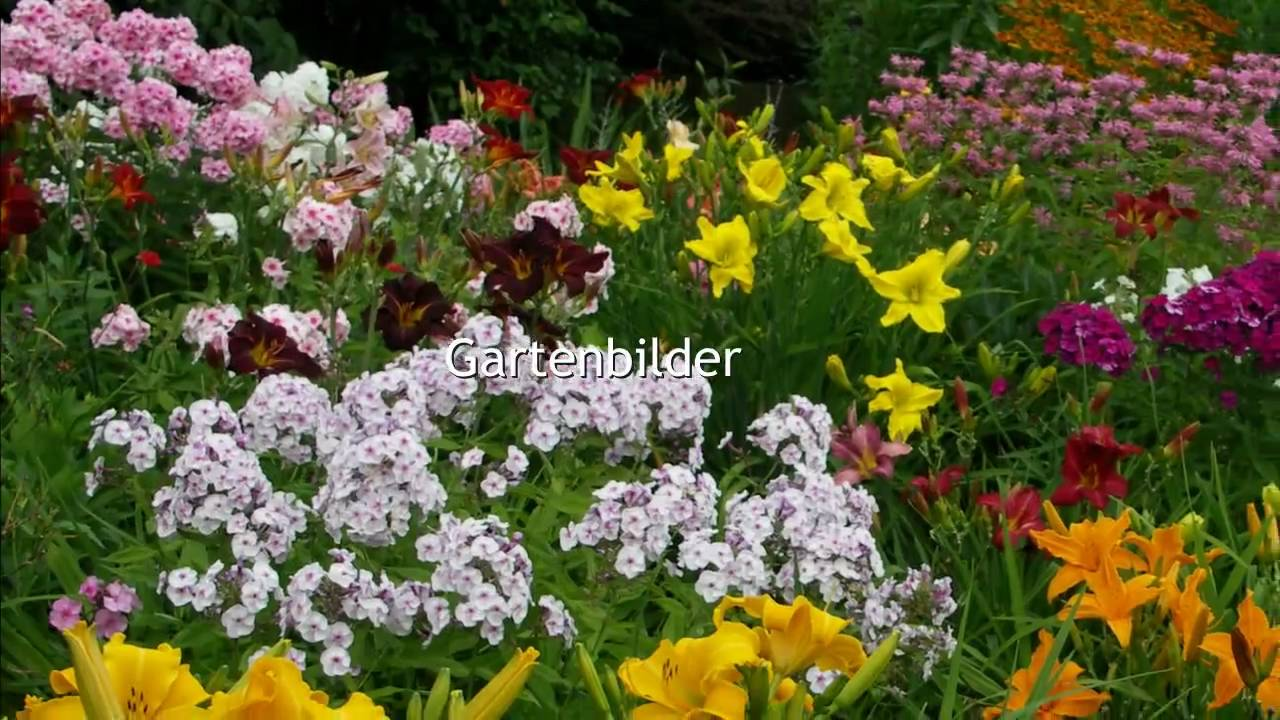 phlox phlox paniculata helenium hybriden helenium youtube. Black Bedroom Furniture Sets. Home Design Ideas