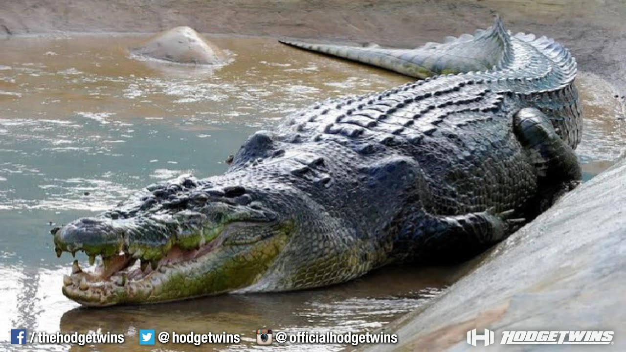 Crocodile eating man alive - photo#27