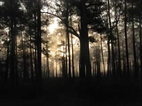 Sephira - When Pixies Sleep (Psybient / Downtempo Mix)