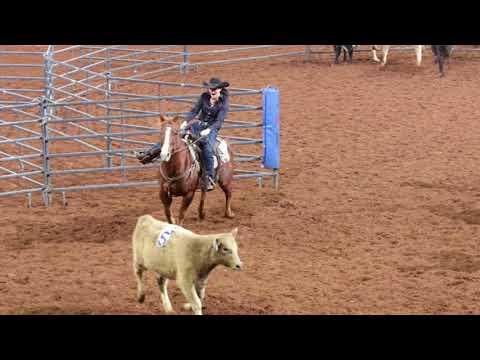 2017 AQHA Amateur Ranch Sorting