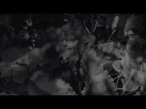 """Wear Your Wounds (Converge Side Project) - New Song """"Shrinking Violet"""""""