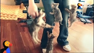 KITTENS ATTACK | The Dodo