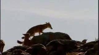 Saving Planet Earth - Graham Norton Wolf Mountain - BBC One